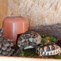 Jaké druhy želv chováme