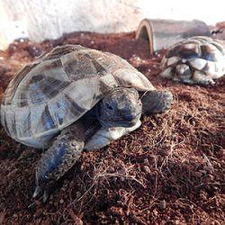 Nemoci želv