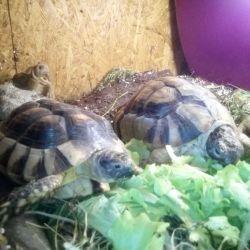 Nákup želvy