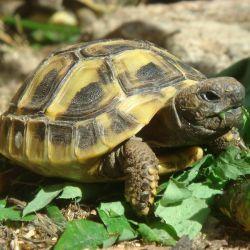 Rozmnožování želviček